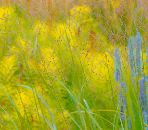 July grass 2014  26