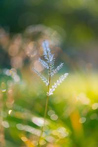 July grass 2014   32