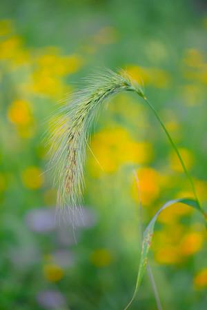 july grass 2014  15