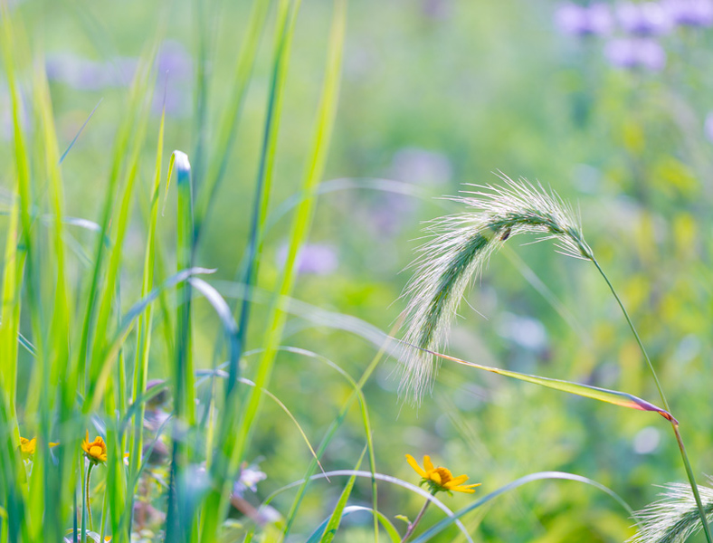 july grass 2014  3
