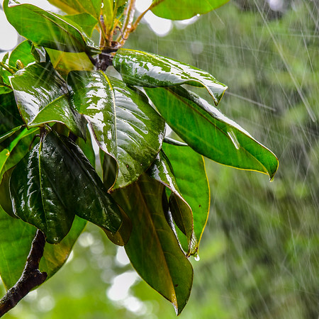 Summer Rain 3