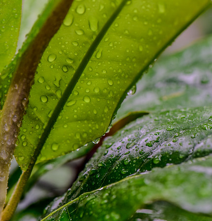 Summer Rain 6