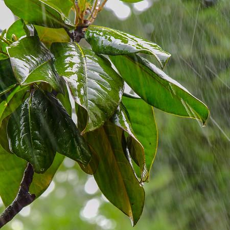 Summer Rain 2