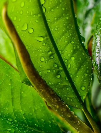 Summer Rain 14