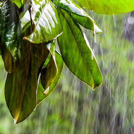 Summer Rain 5