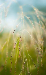 8-1-14 WET GRASS 28
