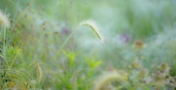 8-1-14 WET GRASS 30