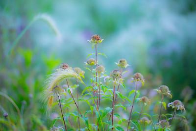 8-1-14 WET GRASS 29