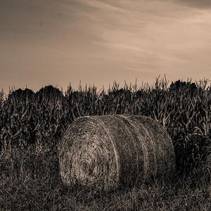 RIVER FARMS  5