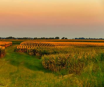 RIVER FARMS  1
