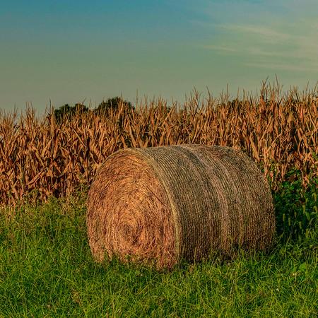 RIVER FARMS  15