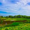 Maine Green 12