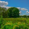 Maine Green 4