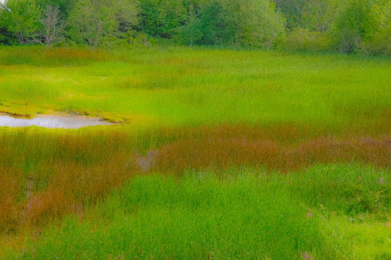 Maine Green 15