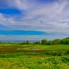 Maine Green 18