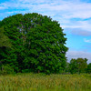 Maine Green 71