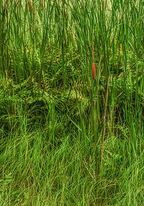 Maine Green 5