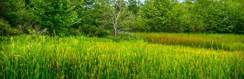 Maine Green 57