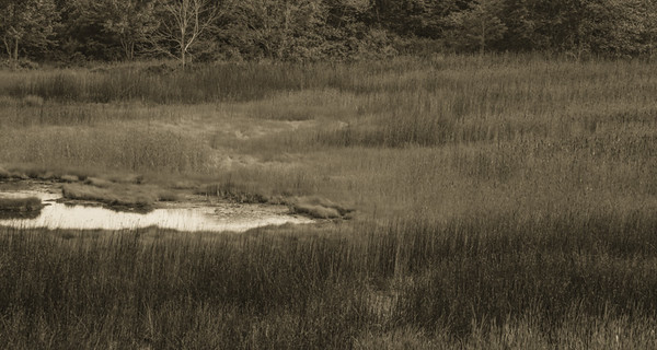 Maine Green 14