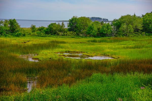 Maine Green 17
