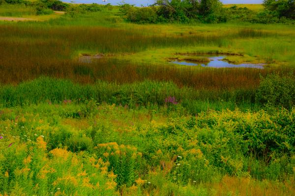 Maine Green 23