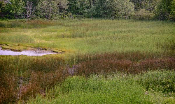 Maine Green 16