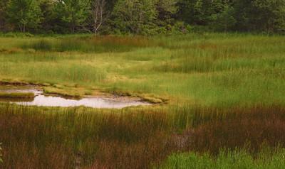 Maine Green 13