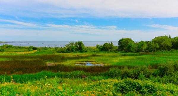 Maine Green 3