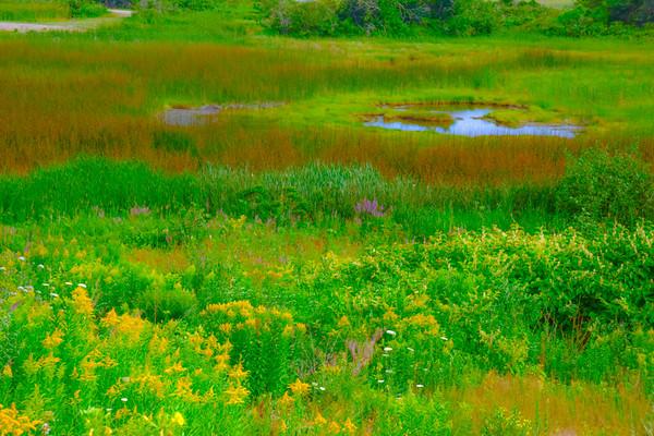 Maine Green 22
