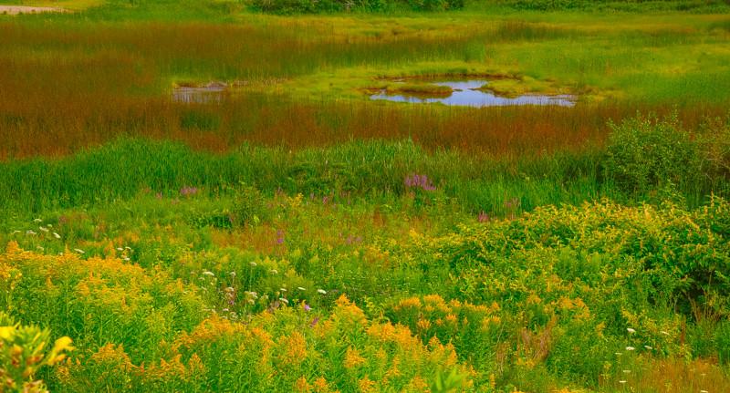Maine Green 20