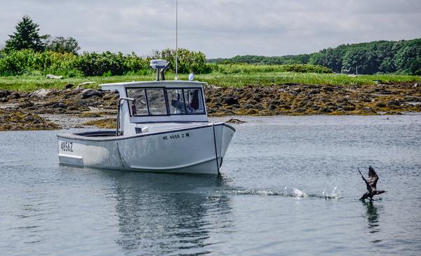 Maine Warf 15
