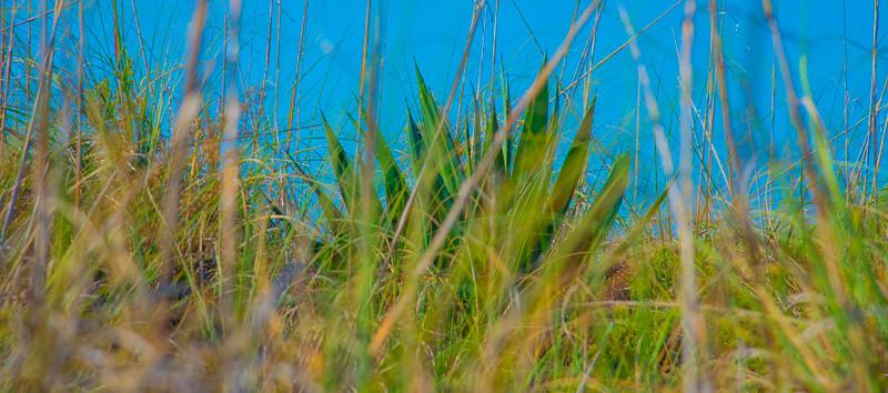 Fort DeSoto Beach 19