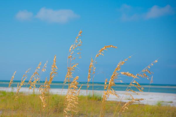 Fort DeSoto Beach 21