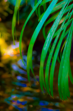 Tropical Color 42