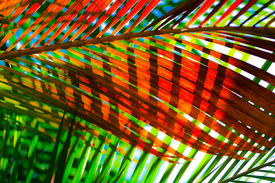 Tropical Color 24