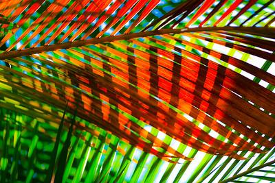 Tropical Color 24