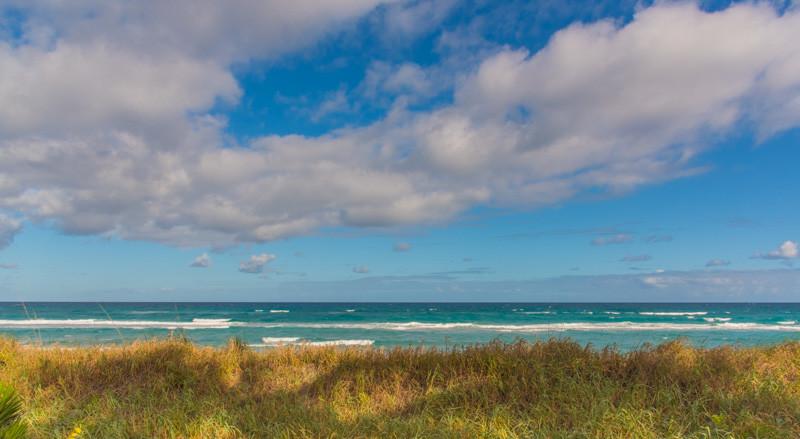 PALM BEACH  29