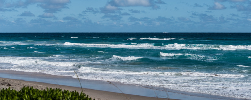 PALM BEACH  56