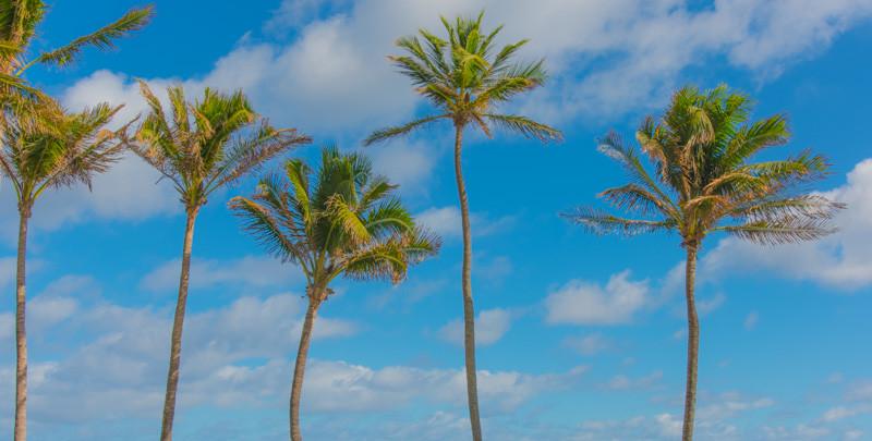 PALM BEACH  11