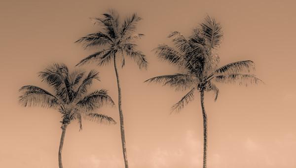 Palm Beach 136
