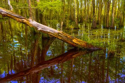 Swamp/Bayou 26