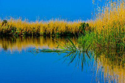 Swamp/Bayou 64