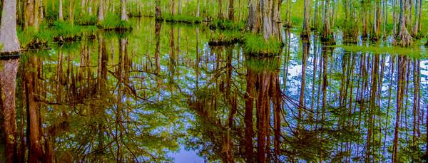 Swamp/Bayou 27