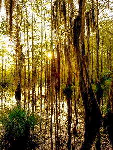 Swamp/Bayou 31