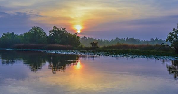Swamp/Bayou 3