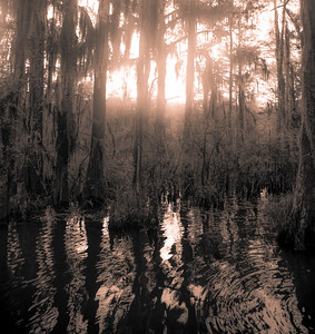 Swamp/Bayou 21