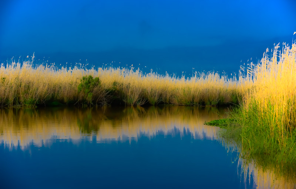 Swamp/Bayou 65