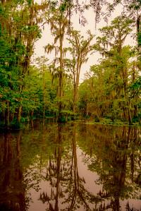 Swamp/Bayou 16