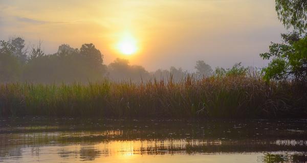 Swamp/Bayou 7