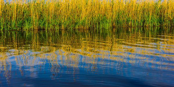 Swamp/Bayou 61
